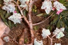 artscapelighting-copper-art-primative branch maple